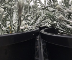 artsy, cold, and plants image