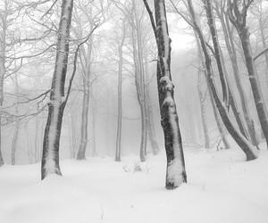 magic, snow, and snow white image