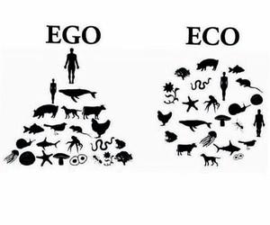 cool, eco, and ego image