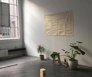 plants, aesthetic, and interior image