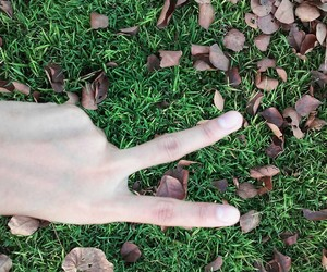 grass, leaves, and dried leaves image