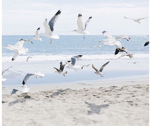 beach, birds, and ocean image