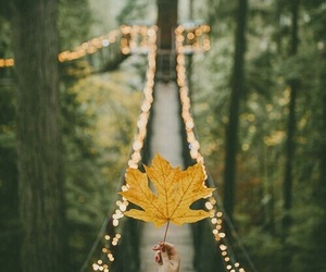 fall, nature, and vibes image