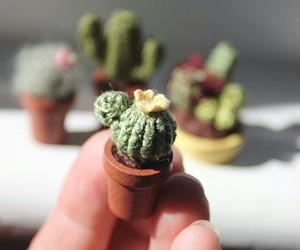 tiny, cactus, and miniature image