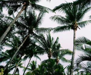 green, palm trees, and sky image