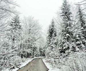 beautiful, christmas, and nature image