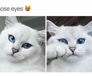 cat eyes blue animals image