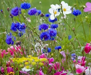flowers, Wild Flowers, and floral field image