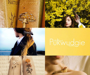 aesthetic, harry potter, and ilvermorny image