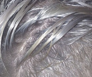 hair and silver image