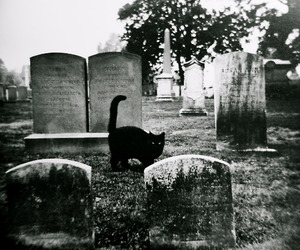 cat, black, and cemetery image
