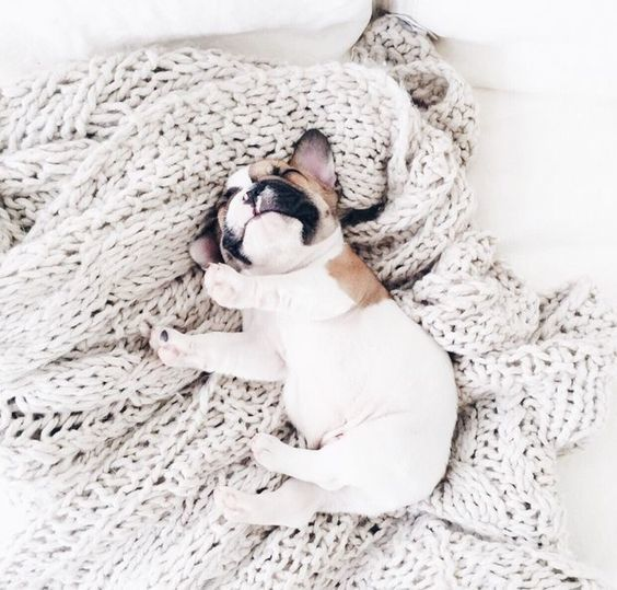adorable, animals, and puppy image