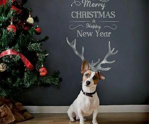 dog and merry christmas image