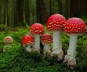 forest, fungus, and grass image