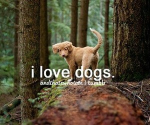 dog, love, and puppy image