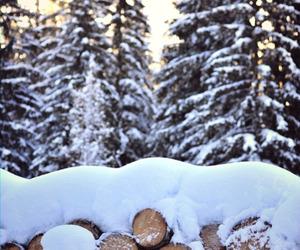 christmas, nature, and snow image