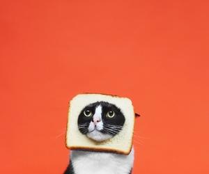 cat, funny, and orange image