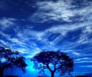 blue, blue tree, and blue ocean image