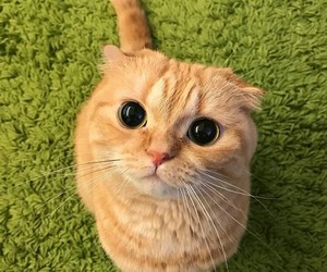 gatito, gato, and kitty image