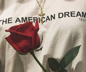 rose, america, and flower image