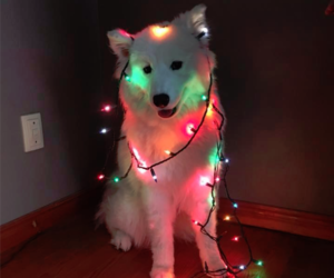 dog, christmas, and animal image