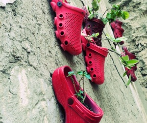crocs, plants, and photography image