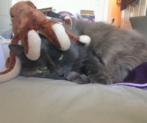 cat, hat, and octopus image