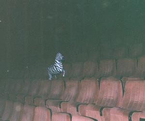 zebra, cinema, and grunge image