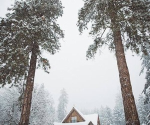 christmas, nature, and winter image