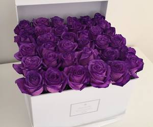 purple, flowers, and rose image