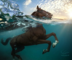 horse and ocean image