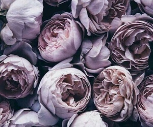 fashion, roses, and flowers image