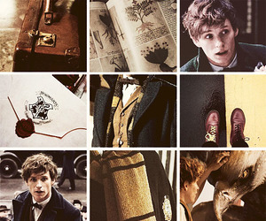 fantastic beasts, newt scamander, and fbawtft image
