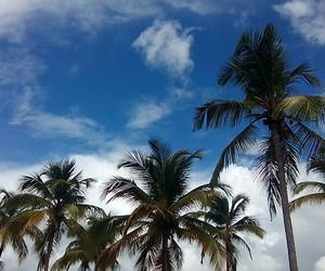palmier and cielbleu image