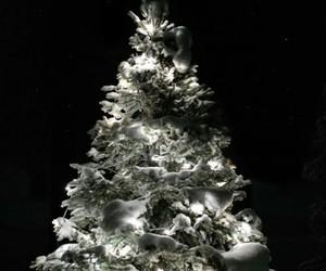 christmas, night, and tree image