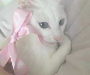 cat, pink, and vintage image