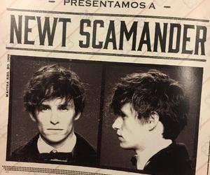 eddie redmayne, hp, and newt scamander image
