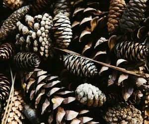 winter, christmas, and brown image