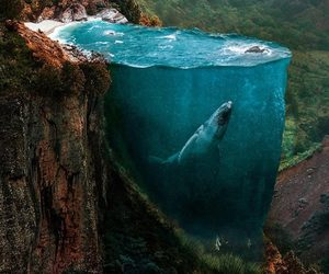 whale, nature, and forest image