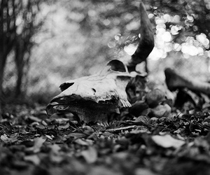 black and white, bones, and horn image