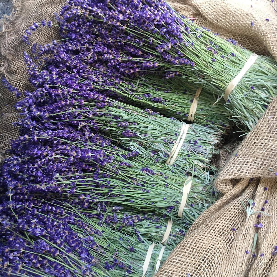 fragrance, pretty, and herbs image