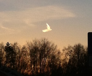 angel, sun, and fotographic image