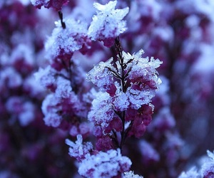 flower, snow, and winter image