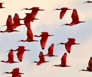 red and bird image