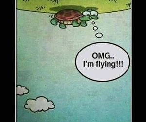 optimism and turtle image