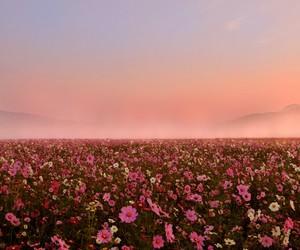 atardecer, rosa, and prado image