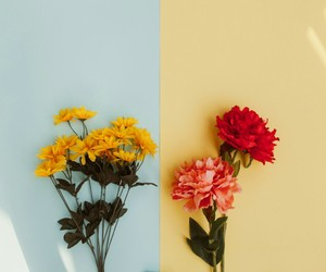 flowers, yellow, and blue image