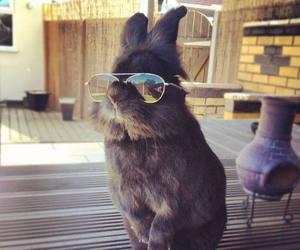 rabbit, animal, and cool image