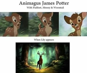harry potter, james, and lilly image