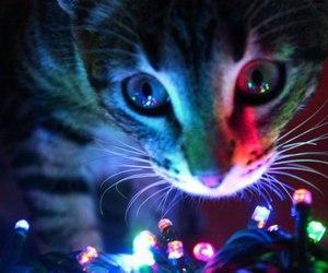 cats, christmas, and christmas tree image